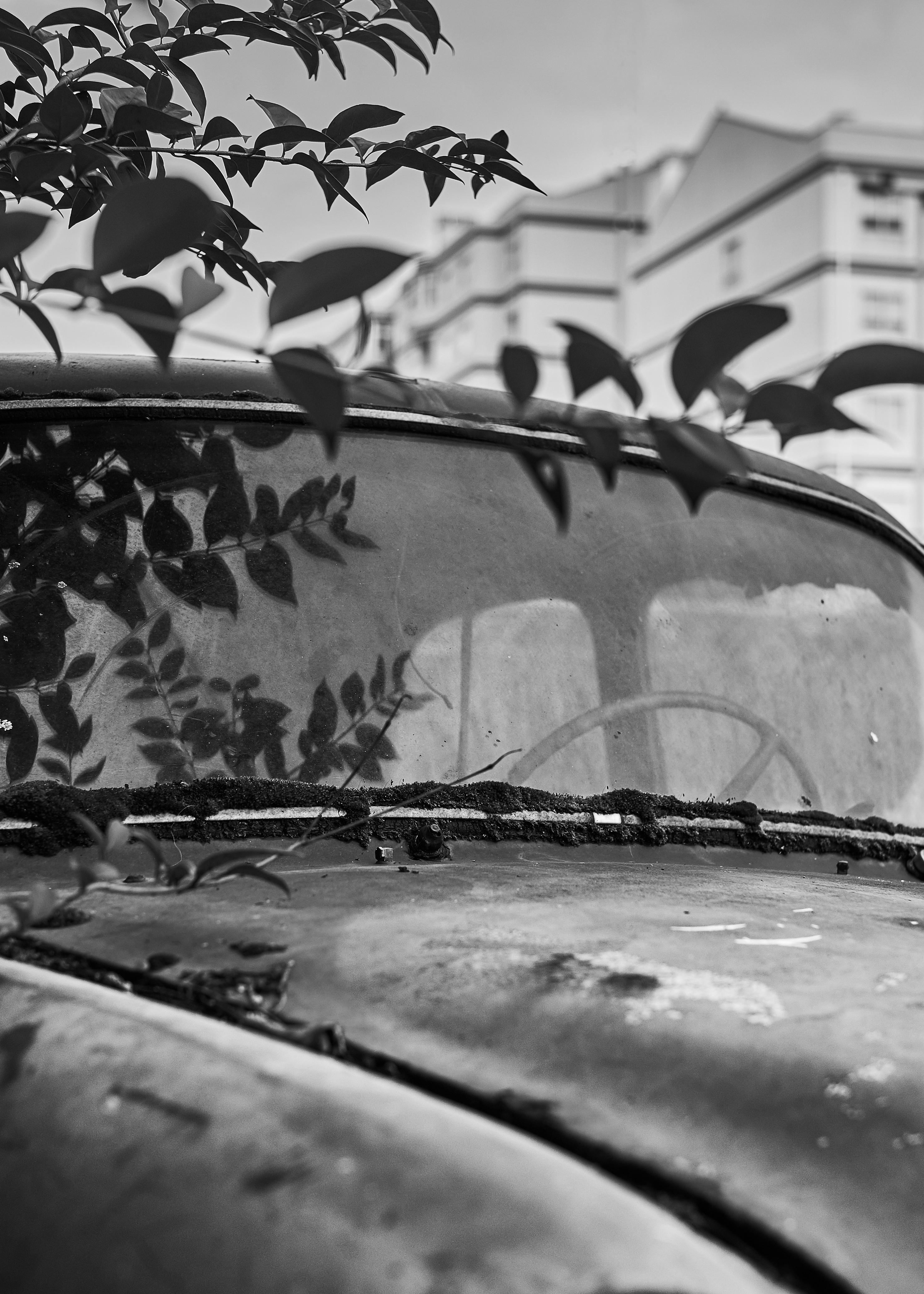 The Overgrown Car