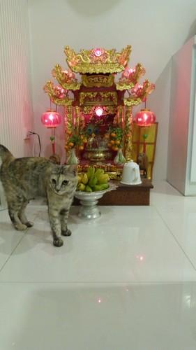Thailand-0349