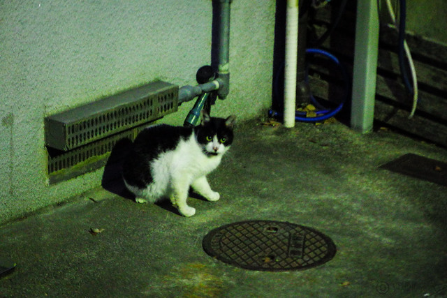 Today's Cat@2016-01-13