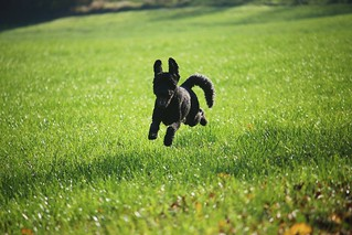 Jumping in the fields