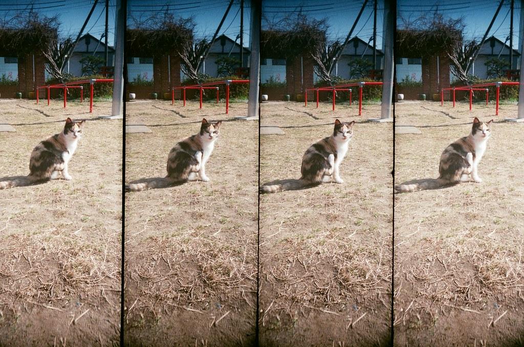 銚子市 千葉縣 / AGFA VISTAPlus / SuperSampler 2016/02/05 用我的視角看你們,我離開的時候真的好想念你們喔,你們好黏好可愛喔!  那時候去到銚子市,一個很少人會去的小鎮,那天天氣變好,好多貓貓跑出來曬太陽,這兩隻很黏,一直給我騷肚子!  現在有點想念牠們了!  SuperSampler Dalek AGFA VISTAPlus ISO400 8266-0034 Photo by Toomore