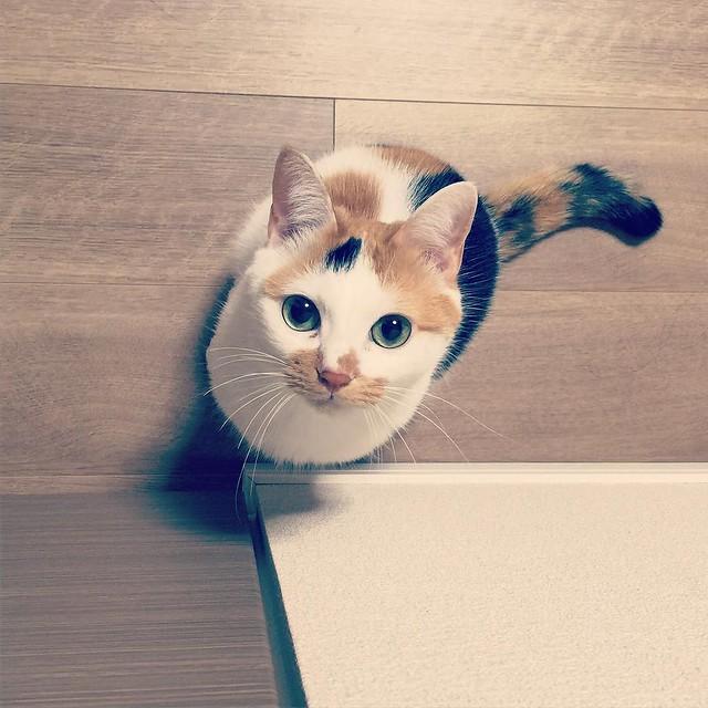 ロックオンされました🙀 #cat #cats #catsofinstagram #catstagram #instacat #instagramcats #neko #nekostagram #猫 #ねこ #ネコ# #ネコ部 #猫部 #ぬこ #にゃんこ #フワモコ部