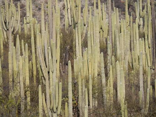 Jardin Botanico Helia Bravo Hollis - veel cactussen