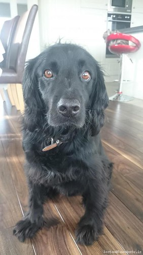 Mon, Feb 15th, 2016 Lost Male Dog - Ballymurn, Wexford
