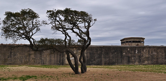 Fort Monroe, Live Oak (Quercus virginiana) (15)