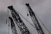 Tokyo Cranes by 2.5JIGEN.com