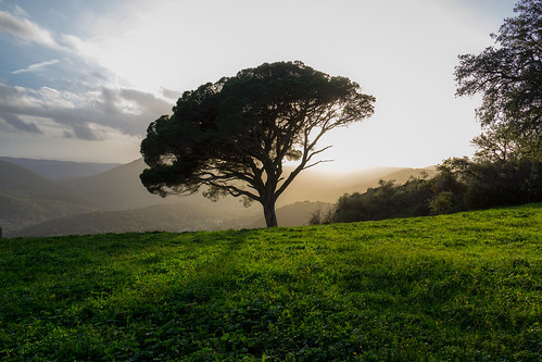 sunset españa tree arbol andalucía spain huelva andalucia árbol andalusia montano peña bernabeu arias alajar crag marcial bernabéu ariasmontano alájar