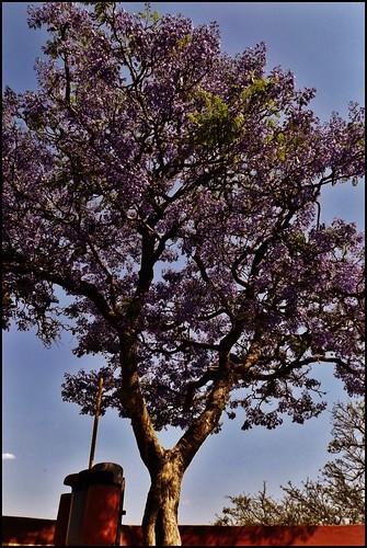 Huejotzingo Puebla