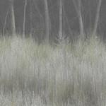 Bosque del Apache Workshop_November_2015_Landscapes
