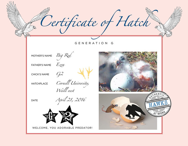 2016 Hatch Certificate-G2