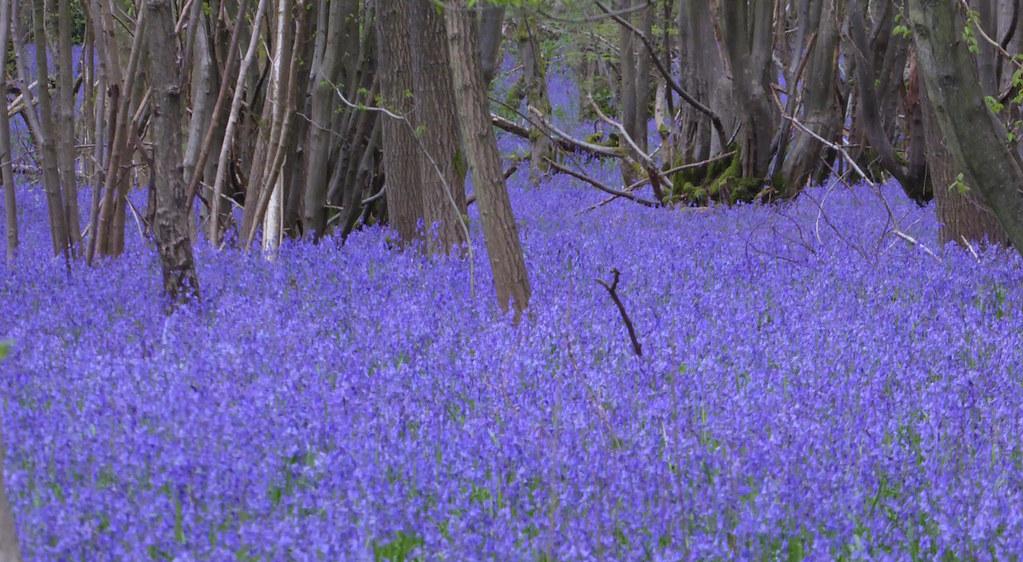 Near Dunks Green, Kent Yalding to Sevenoaks walk