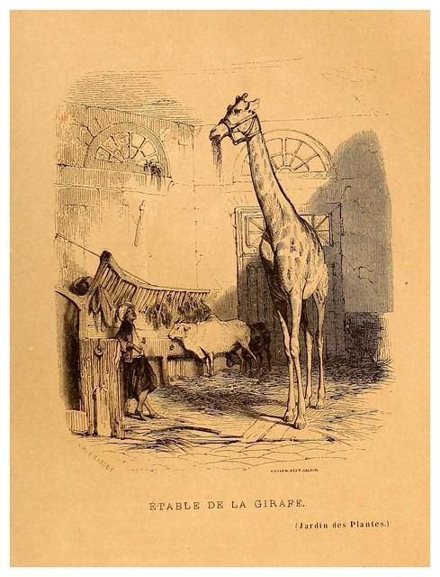 012- Establo de la jirafa-Le Jardin des plantes description et murs des mammifères..1842-Pierre Boitard