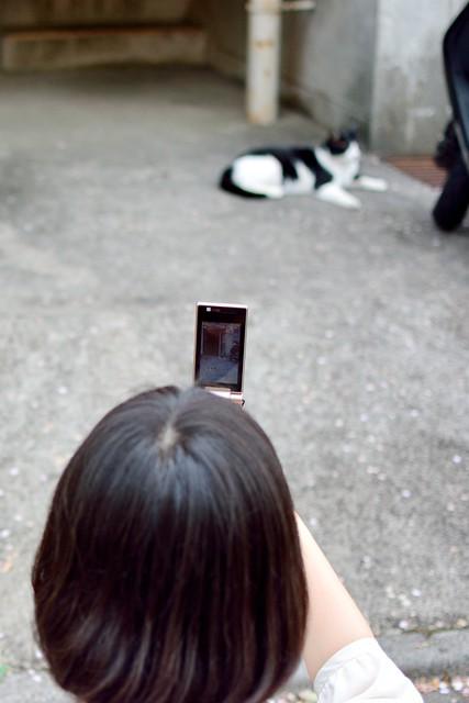 ガラケーで写真を撮られるネコの写真