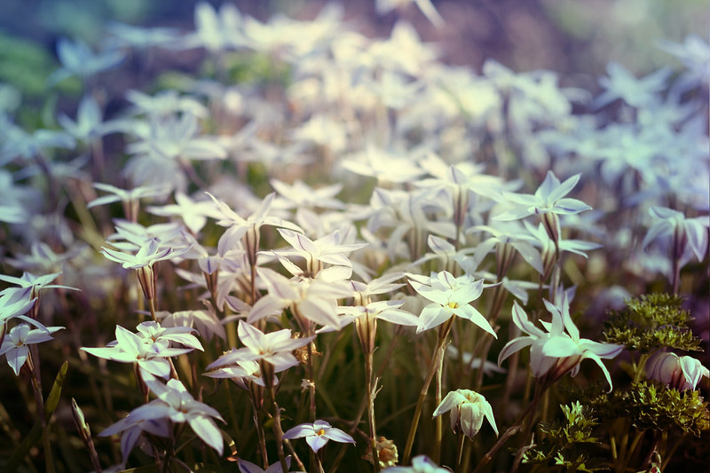 blur-dreamy-texture-texturepalace-33