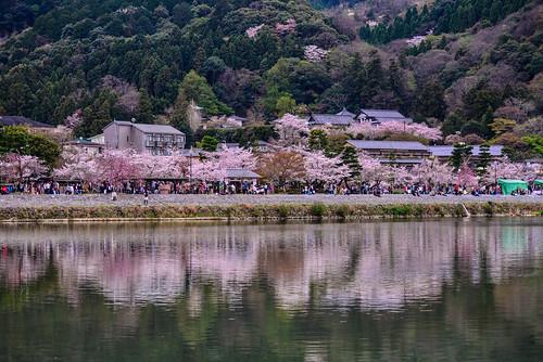 嵐山櫻景(DSC_3246)