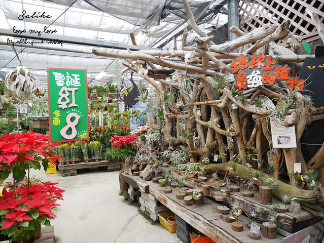 台北一日遊景點推薦台北花卉村 (18)