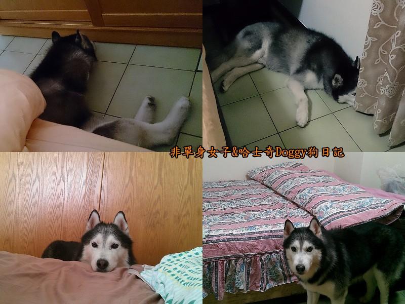 Doggy保暖墊02