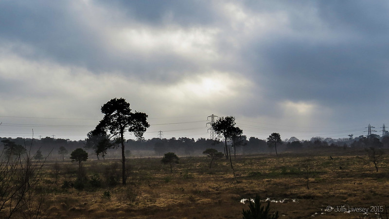 A grey day on Upton Heath