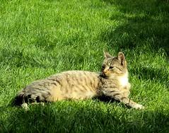cat70