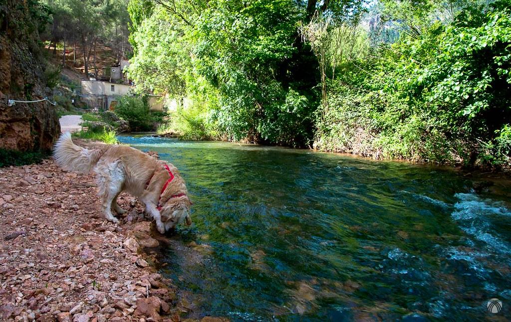 Río Bogarra cristalino