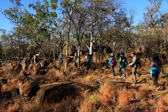 澳洲昆士蘭Undara Experience-清晨Bush walk-20141117-賴鵬智攝-3