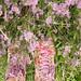 Blumen überall by Gret B.