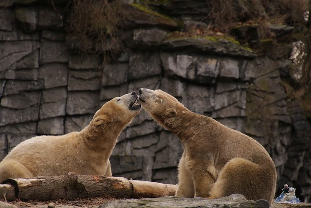 Tierpark Berlin 24.02.2016   144