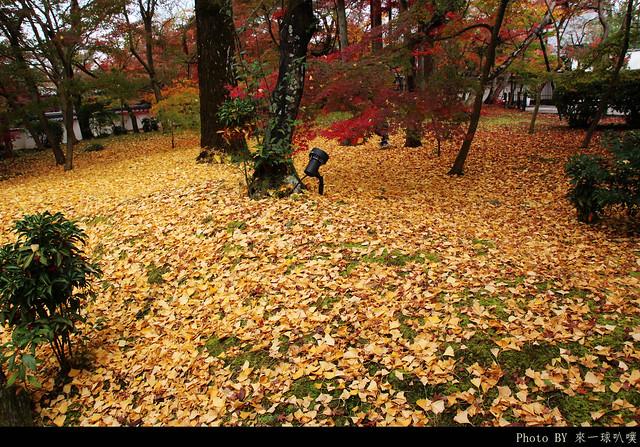 京都-永觀堂053