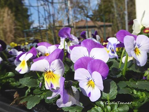 Garten März 2016