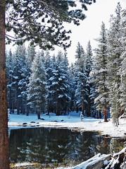 Tioga Lake Reflections, Yosemite 5-15