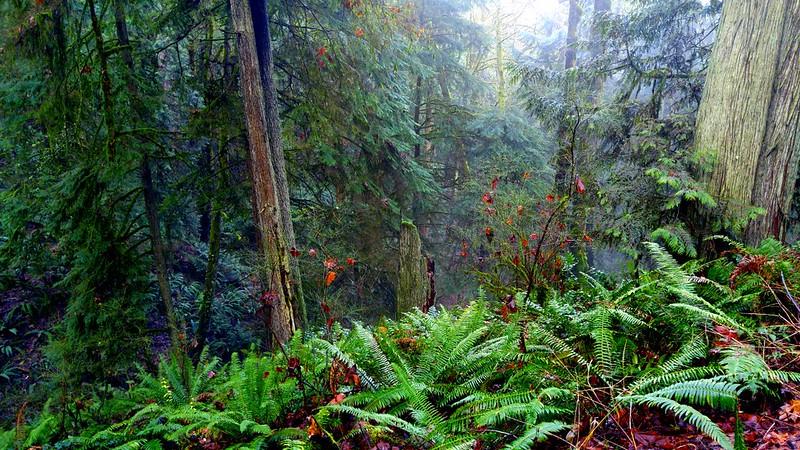 ForestPark4
