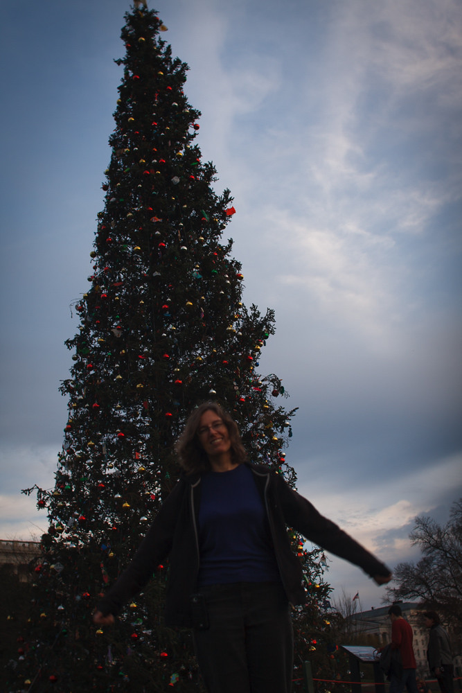 Washington, D.C. Christmas Trees (1 of 6)