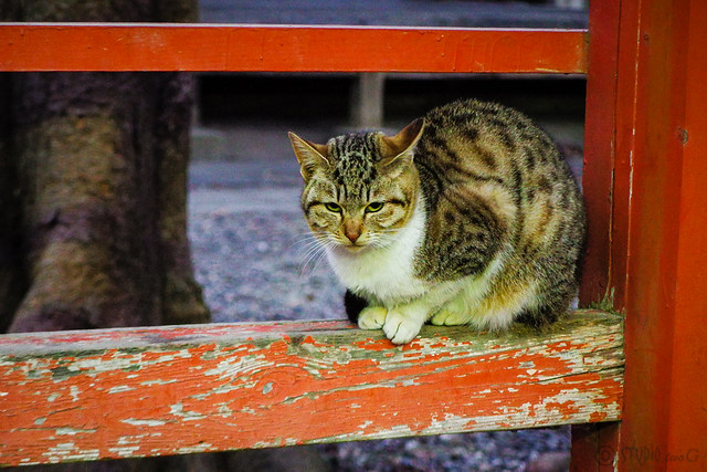 Today's Cat@2016-02-09