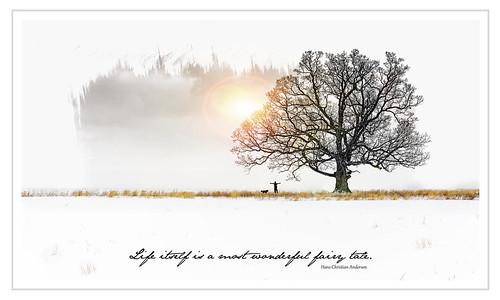 life trees winter light sunset snow texture silhouette sunrise landscape niagarafalls graphic outdoor quote whitebackground fairy tale whiteborder d600 photoborder denisrichard