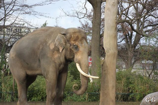 Zoo Berlin 31.01.201612