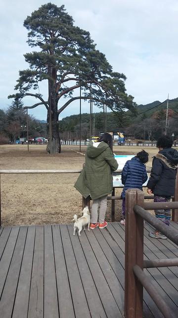 속리산 정이품송
