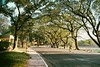 Bike around UP Diliman