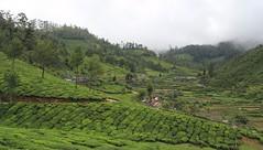 Landscape - India