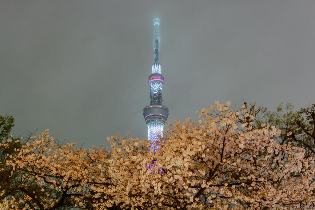 Tokyo Sky Tree with Sakura