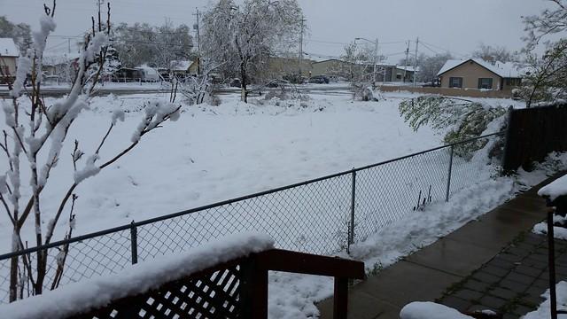 Spring Snow