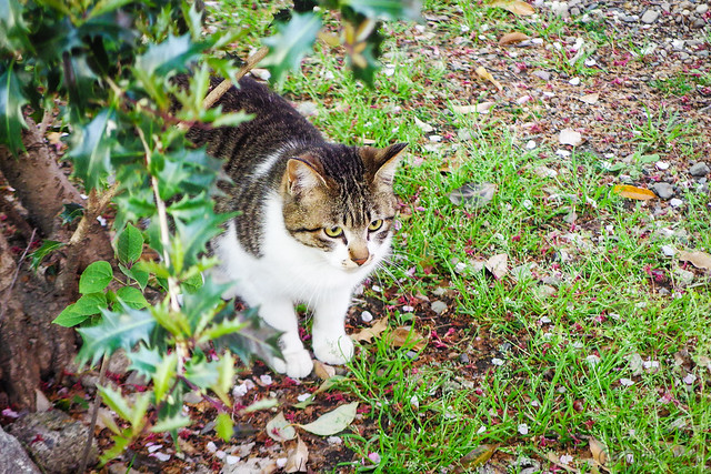 Today's Cat@2016-04-16