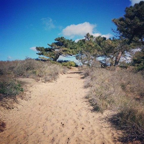 A beautiful but intense dune hike 😎 Will feel it in our muscles tomorrow! #hiking #naturelover #naturelovers #outdoors #nature #dune #dunes #dunesdeslack #coteopale #france #beautifulfrance #cotedopale #nordpasdecalais #nordpasdecalaistourisme