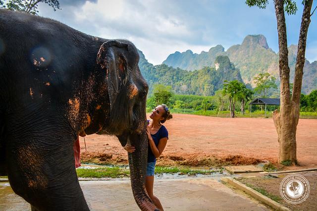 Elephant Hills Elephant Camp A Cruising Couple