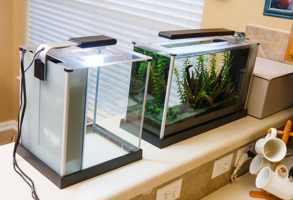 Fluval Spec III And Spec V Aquariums   Lights