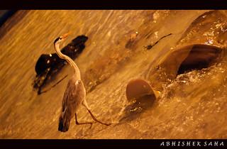 Sting-Ray & Bird