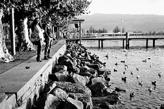 Rapperswil - Ilford XP2