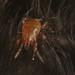EF7A0978bumblebeemite by davholla2002
