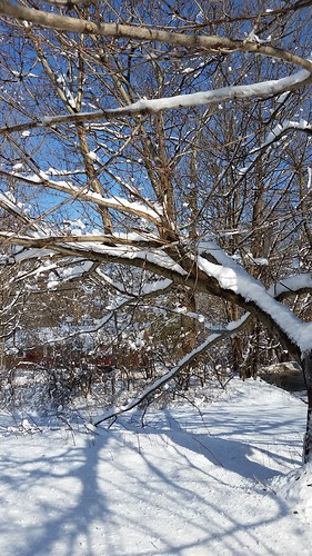 Winter Wonderland. Snow. #LapdogCreations