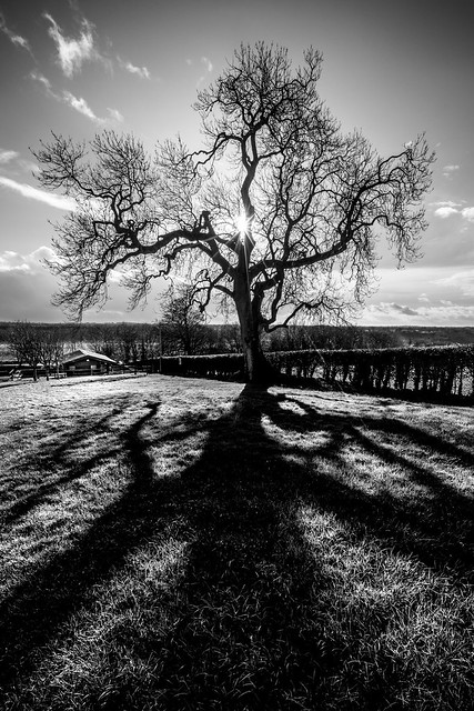 The tree newgrange ireland landscape photography