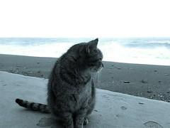 #gatto#letojanni#messina#sicily #sicilia #sicilyismylove#italia#italy#gato#cat#mare#sea#mar